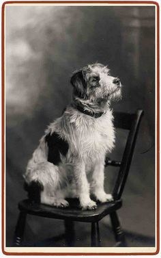 Vintage photo, dog on chair.