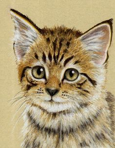 kitten using pastel pencils