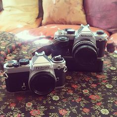 Sisters.  Thanks @capeclassiccameras for indulging my obsessive nature. #nikon #film #shootfilm #analogphotography #35mm #goodweatherforducks #analog #filmisnotdead #filmphotographic #filmphotography #filmcommunity #shootfilm #shootfilmstaybroke #shootfilmnotbullets #ishootfilm