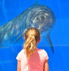 dolphin looking at child aquarium