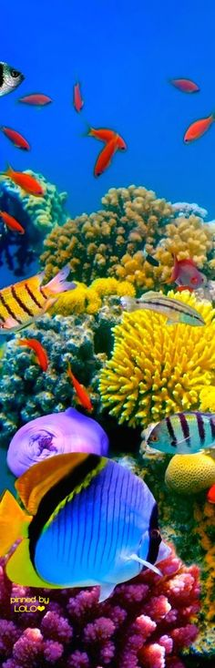 Another dream destination....Great Barrier Reef   LOLO❤