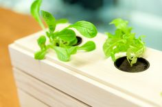 Hemmaodlat is raising funds for Scandinavian Design Grow Box on Kickstarter! A hydroponic grow box with everything you need to get started growing in your own home. Hand made in Sweden with Scandinavian design. Hydroponic Grow Box, Hydroponics, Grow Boxes, Aquaponics System, Raise Funds, Grow Your Own, Window Sill, Scandinavian Design, Harvest