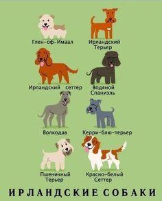 Ирландские собаки