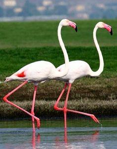 Pair of flamingos via www.Facebook.com/PositivityToolbox