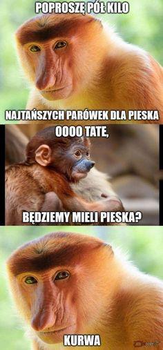 Małpa Janusz -nosacz -parówki mem Everything And Nothing, Wtf Funny, Einstein, Haha, Health Fitness, Memes, Pictures, Photos, Ha Ha