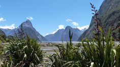 South Island : Fiordland Top Place, South Island, Hands On Activities, The Locals, Places Ive Been, To Go, Europe, Spaces, Mountains