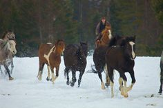 Bar W Guest Ranch winter horse riding in a fun Montana adventure.