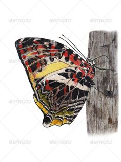 Butterfly clutching the tree