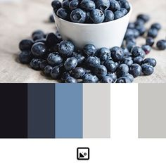 Blueberry neutral #pallete #colour #colors #colours #keynotedesign #keynote #key #powerpointdesign #powerpoint #ppt #designinspiration #design