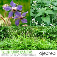 Ajedrea Cosmética Natural Artesanal: Taller de plantas silvestres autoctonas comestibles y depurativas - Semana Detox