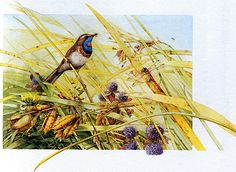 Marjolein Bastin Nature Sketches