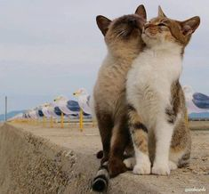 Cute kittens are fun Cute Cats And Kittens, I Love Cats, Crazy Cats, Kittens Cutest, Kitty Cats, Cat Hug, Beautiful Cats, Animals Beautiful, Cute Funny Animals