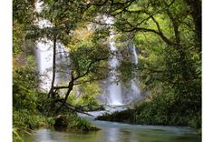 Daintree Rainforest—Queensland, Australia - Shutterstock