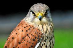 birds of prey - Google Search