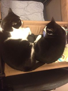 My cats beau and hope together for ever ❤️ Mis gatos beau y hope juntos para siempre!