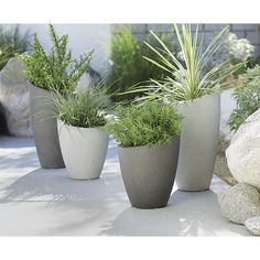 Shop Slant Cement Planters.  A slight slant to the rim trends these planters from the expected to the delightfully different.