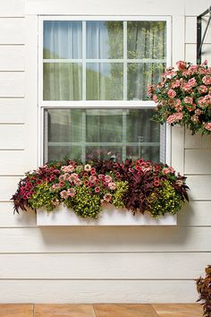 7 Beautiful Summer Window Boxes With Beautiful Flowers Window Box Plants, Window Box Flowers, Balcony Flowers, Window Planter Boxes, Window Boxes Summer, Container Gardening, Beautiful Flowers, Beautiful Beautiful, Windows