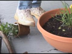 Herb Container Gardening  For The Apartment Owner - How to have a garden without a yard