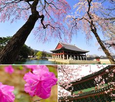 Flowers blossoming in Korean palaces