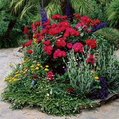 In a patio bed - How to Grow a Cottage Garden - Sunset