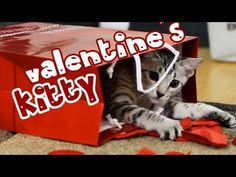 Click to Tweet.  http://clicktotweet.com/dbsP5    Nylah wanted to wish you a Happy Valentine's Day.  If you wish, spread the love by sharing this video.  Also, show Nylah some love by liking/fav the video.     Click here to see Nylah's last video!  http://youtu.be/ZfqA8PoUqLg    Adopted from: http://youtube.com/wildtafari