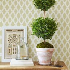 Topiary Tree in a Whitewashed Pot