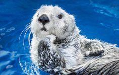 海遊館の常設展示、新体感エリア、企画展、約620種30,000点の生き物たちの紹介のほか、館内の各種設備やサービスをご案内しています。