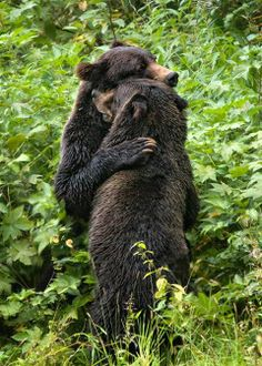 Look! Hugging!