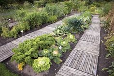 Intensive Gardening: Grow More Food in Less Space (With the Least Work!) - Grow in raised beds or create permanent walkways to prevent soil compaction. From MOTHER EARTH NEWS