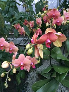 Beautiful orchids at the Chicago Botanic Garden.