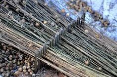 flax processing - Google Search