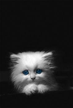 perfect tiny kitty