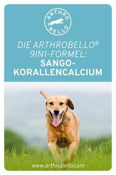 Dank der Sango Koralle bekommt Ihr Hund wichtige Spurenelemente und Mikronährstoffe, die sich positiv auf den Heilungsprozess und die Stabilität der Knochen auswirken. Labrador Retriever, Dogs, Animals, Healing, Pet Dogs, Labrador Retrievers, Animales, Animaux, Doggies