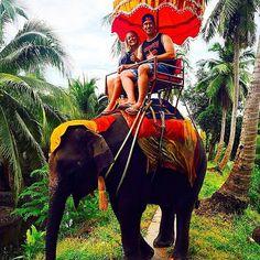 Take an Elephant Ride Together