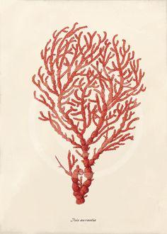 coral art