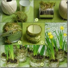 Moss covered tin can planter...I love this idea.  simply to make yet pretty.  This would be good for a centerpiece or even as a decorative flower or herb container.