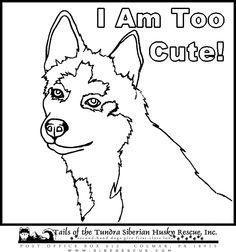 Husky Dogs To Color