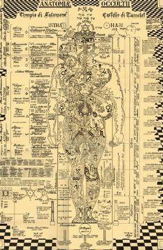 The occult anatomy
