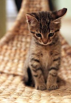 A tiny kitten sitting on a wicker seat.