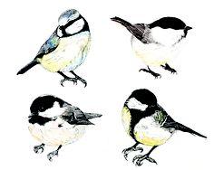 Ella Johnston Bird Illustrations.