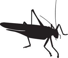 323RA - Grasshopper Silhouette