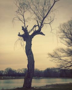 Venus de Milo in tree form.  #trees #tree #broken #sky #pond #ice #frozen #park #overcast #clouds #cloud #landscape #landscape_lover #landscape_lovers #nature #naturelover #naturelovers #sunset #dusk #scenic #view #rural #country #sculpture #january #winter #princeton #newjersey