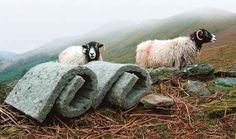 """Sheep's Wool a Sustainable Home Insulation Solution  - """"Wool is sustainable, natural and renewable. Insulation from sheep's wool is safe and easy to install. Sheep's wool won't cause eye or skin irritation and the fibres are not hazardous to health. Wool absorbs and breaks down indoor air pollutants like sulphur dioxide and nitrogen dioxide. Wool has a higher resistance to fire than cellular plastic insulation."""""""