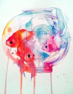 fish n colors