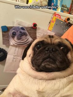 Dump A Day Funny Pictures Of The Day - 96 Pics. Who wore it better Wednesday...all my chinny chin chins. dog
