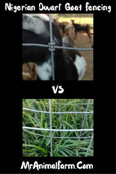 What type of fencing is best to use for your goats?  Find out what each fencing type means and pros and cons for using each.