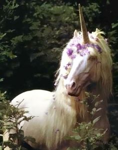 beautiful unicorn...photo by Robert Vavra. I own two of his unicorn photography books, and they are magical!