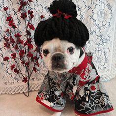 Geisha - Pet Halloween Costumes - Southern Living