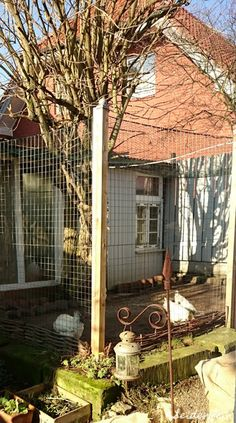 seidenfeins Blog vom schönen Landleben: Hühnerhaus im Februar * hens villa in february Villa, Rose, Berry, Plants, Blog, Victorian, Country Living, Woods, Lawn And Garden