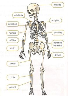 Color the bones of the hand - Education subject Anatomy Coloring Book, Coloring Books, Medicine Notes, Body Bones, Biology Lessons, Human Body Parts, Medical Anatomy, Kids English, Student Studying